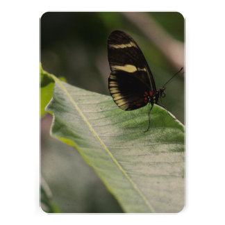 Yellow And Black Butterfly Cards