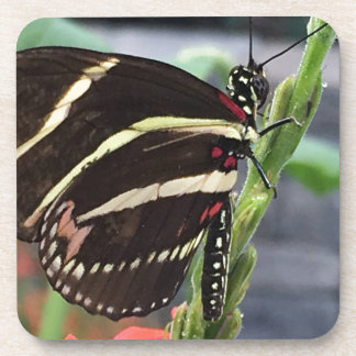 Yellow and Black butterfly wings Coaster