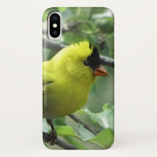 Yellow and Black Goldfinch iPhone X Case