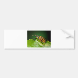 Yellow and black  striped weevils bettle bumper sticker