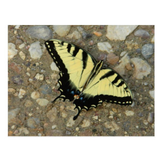 Yellow and Black Swallowtail Postcard