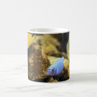 Yellow and Blue Ciclid Reef Fish Mug