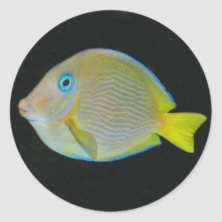 Yellow and blue fish stickers