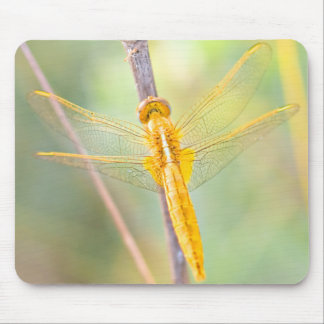 Yellow and Gold Dragonfly Mouse Pad