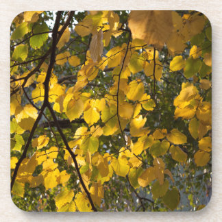 Yellow and green autumn leaves beverage coaster