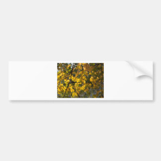 Yellow and green autumn leaves bumper sticker