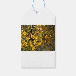 Yellow and green autumn leaves gift tags