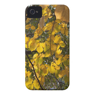 Yellow and green autumn leaves iPhone 4 case