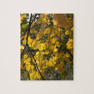 Yellow and green autumn leaves jigsaw puzzle