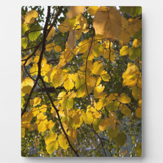 Yellow and green autumn leaves plaque