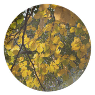 Yellow and green autumn leaves plate