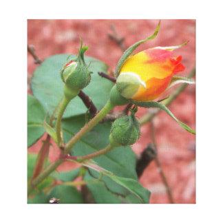 yellow and orange rose bud photo canvas print
