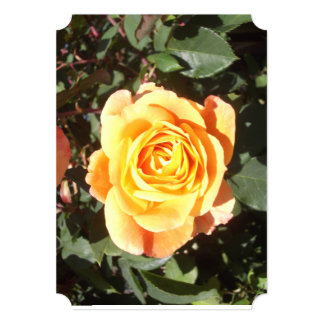 Yellow and Orange Rose Greeting Card/invitation Card