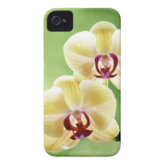 Yellow and Pink Orchid iPhone 4 Cover
