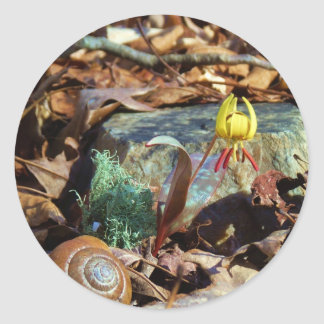 Yellow and Plum Trout Lily and Snail Shell Round Sticker