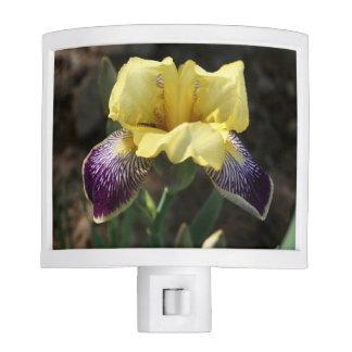 Yellow and Purple Iris Night Light