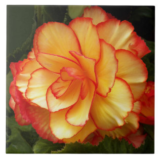 Yellow and Red Begonia Floral Tile