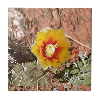 Yellow and red cactus flower in bloom tile