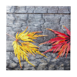 Yellow and red maple leaf on black burnt wood ceramic tile