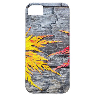 Yellow and red maple leaf on black burnt wood iPhone 5 cases