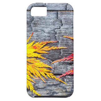 Yellow and red maple leaf on black burnt wood iPhone 5 cover