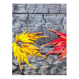 Yellow and red maple leaf on black burnt wood postcard