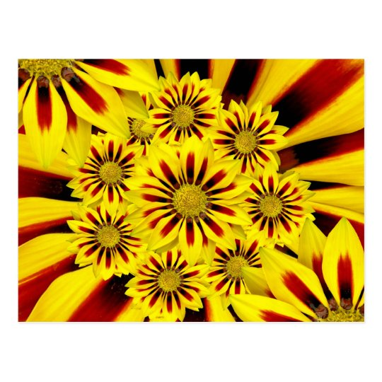 Yellow and Red Striped Gerbera Daisy Sunflower Postcard