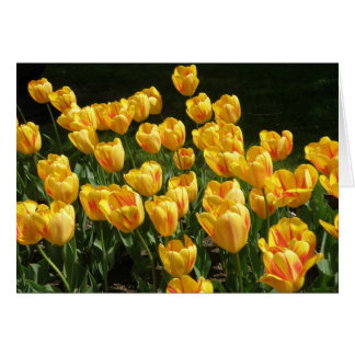 Yellow and Red Variegated Tulips Card