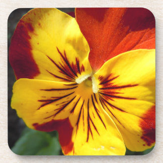 Yellow and Rusty Red Pansy Coaster