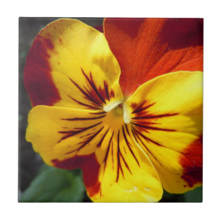 Yellow and Rusty Red Pansy Tile
