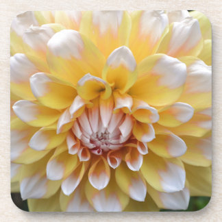 Yellow and White Dahlia Coaster