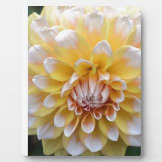 Yellow and White Dahlia Plaque