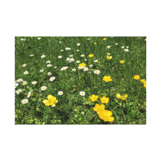Yellow and White Daisies Wrapped Canvas