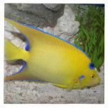 Yellow Angelfish Photo Tile