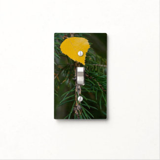 Yellow Aspen Leave on Evergreen Branch Photograph Light Switch Cover