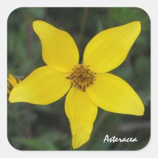 Yellow Aster Sticker