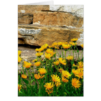 Yellow Asters Card