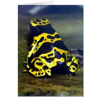 Yellow-banded Poison Frog - Dendrobate leucomelas Card