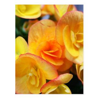 Yellow begonia postcard