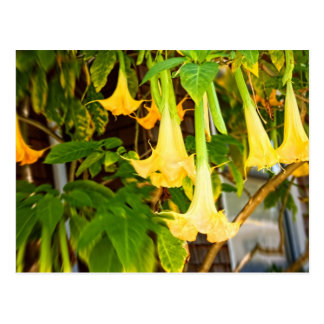 "yellow ""bell""l flowers postcard"