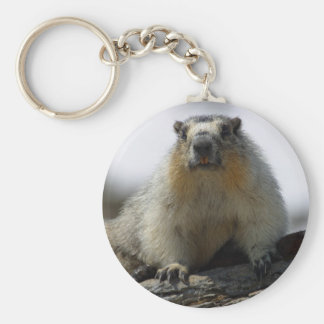 Yellow Bellied Marmot Basic Round Button Keychain