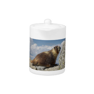 Yellow Bellied Marmot in Yosemite