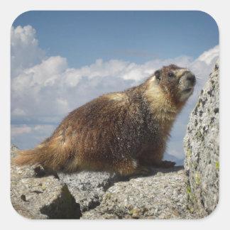 Yellow Bellied Marmot in Yosemite Square Sticker