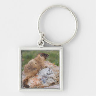 Yellow-bellied Marmot, Marmota flaviventris, Silver-Colored Square Keychain