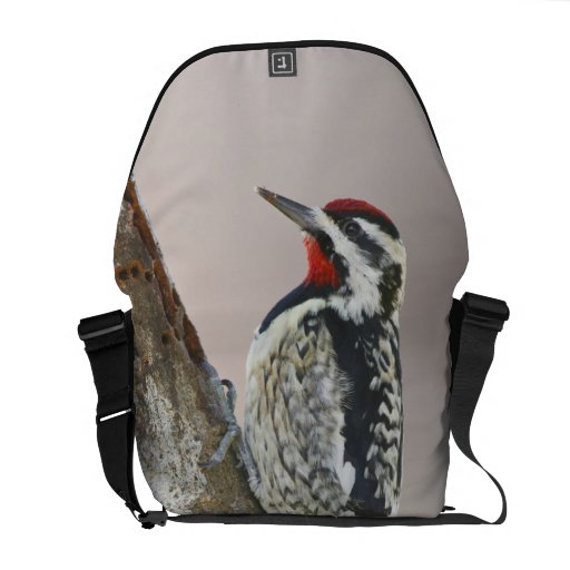 Yellow-bellied Sapsucker male feeding on sap Commuter Bag
