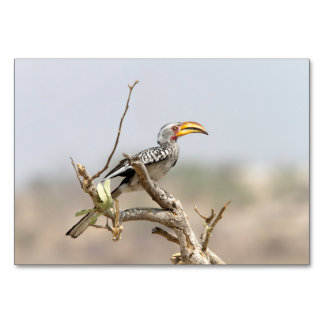 Yellow billed hornbill table cards