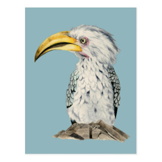 Yellow-Billed Hornbill Watercolor Painting Postcard