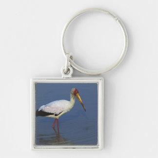 Yellow-billed Stork, Masai Mara, Kenya Keychain