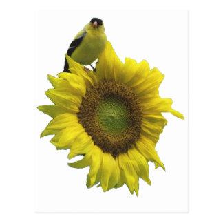 Yellow bird on yellow sunflower. postcard