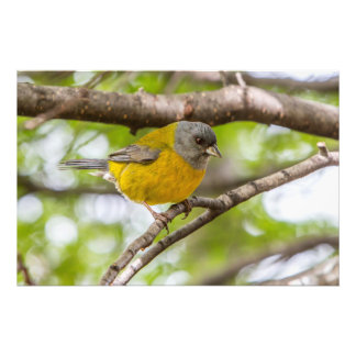 Yellow Bird Photo Print